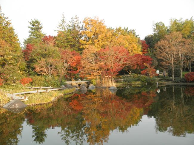 東京都立川市、昭島市:国営昭和記念公園(2011年11月撮影)、色づいた木々の赤や黄色がみごとに水面上に再現(日本庭園)